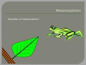 Rocks and Minerals - Metamorphic Rocks
