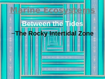 Rocky Intertidal Zone PowerPoint