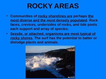 Rocky Intertidal Zones