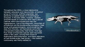 Rodhocetus