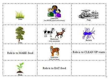 Roles of Producers, Consumers, and Decomposers File Folder Activity
