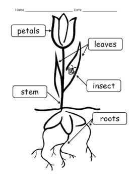 Roll a Flower Activity {Bonus Label Flower Parts Activity Sheets}