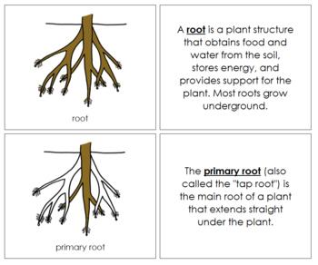 Root Nomenclature Book