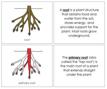 Root Nomenclature Book (Red)