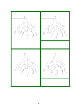 Root System 3-part Cards