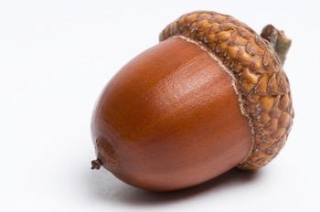 Root Words 1 (acorn)