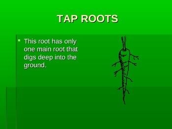 Roots & Leaf Structure