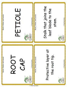 Roots Stems Leaves Vocabulary Cards