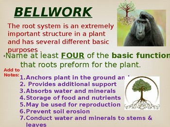 Roots and Soils PowerPoint