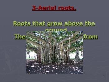 Roots structure and Function