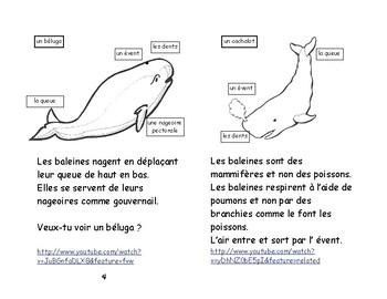 Rose- E-1 ENFANT 2e et 3e Les baleines