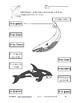 Rose -E-1  PROF 2e et 3e Les baleines