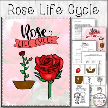 Rose Life Cycle