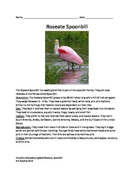 Roseate Spoonbill - bird - review article questions vocabulary information facts