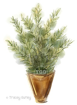 Rosemary Herb in Pot Illustration Printable Tracey Gurley Designs