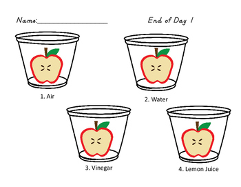 Rotting Apples-A Science Experiment Recording Sheet