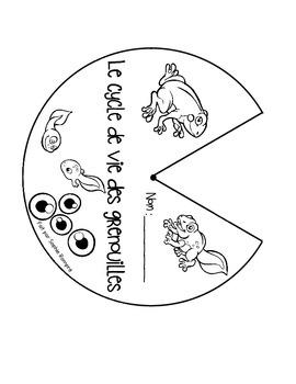 Roulette - cycle de vie de la grenouille