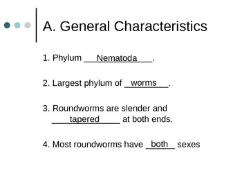 Roundworm PowerPoint