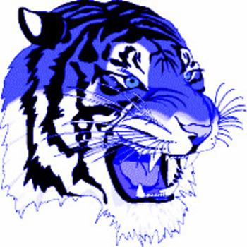 Royal Blue Tiger