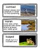 RreadyGEN The Frog Princess: A Tlingit Legend from Alaska