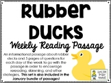 Rubber Ducks - Weekly Reading Passage and Questions