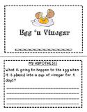 Rubber Egg Experiment