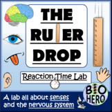 Ruler Drop Lab (Senses Lab)