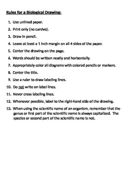 Rules for a Biological Drawing