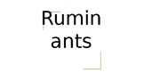 Ruminant Digestion- Livestock Nutrition and Digestion