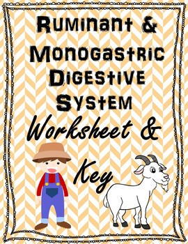 Ruminant and Monogastric Digestive System Worksheet