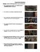 Rushmore Film (1998) Study Guide Movie Packet