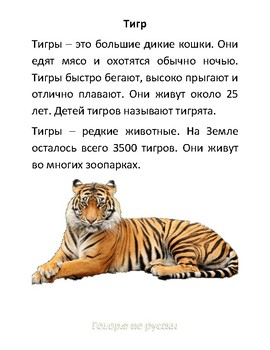Russian Comprehension Worksheet about Tiger