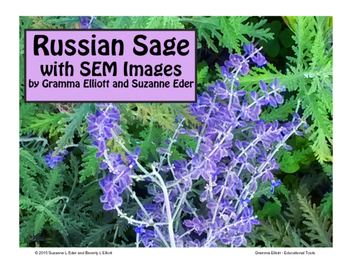 Russian Sage with Scanning Electron Microscope Images