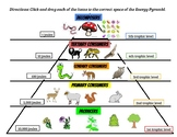 GOOGLE SLIDES Energy Pyramids and Trophic Levels Click and Drag Activity
