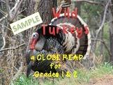 Thanksgiving Activities WILD TURKEYS CLOSE READ GRADES 1 and 2 SAMPLE
