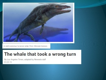 SBAC Preparation: 3rd grade The Whale That Took A Wrong Turn