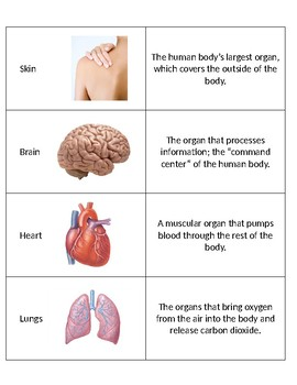 SC.5.L.14.1 The Human Body Organs and Their Functions Matching Game