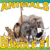 SCIENCE ANIMAL / ECOSYSTEM Bundle #1 (17+ Assignments / 60 Pages)