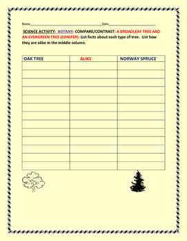 SCIENCE: BOTANY ACTIVITY: COMPARE/CONTRAST A BROADLEAF TREE & A CONIFER