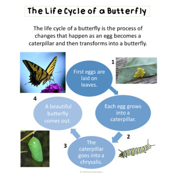 SCIENCE: Life Cycles of Plant, Frog, and Butterfly {EDITABLE}
