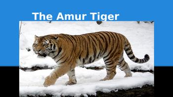 SCIENCE POWER-POINT UNIT: THE AMUR TIGER