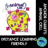 SCIENCE SCAFFOLDED NOTES/ ANCHOR CHARTS: EUKARYOTE: THE ANIMAL CELL