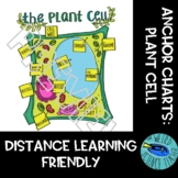SCIENCE SCAFFOLDED NOTES/ ANCHOR CHARTS: EUKARYOTE: THE PLANT CELL