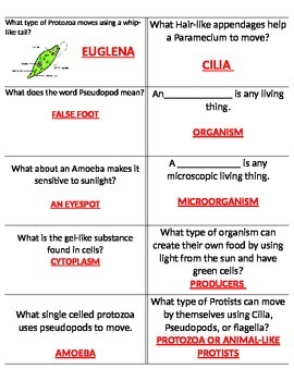 SCIENCE Vocabulary Questions (sixth grade)