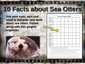 SEA OTTER: 10 facts. Fun, engaging PPT (w links & free graphic organizer)