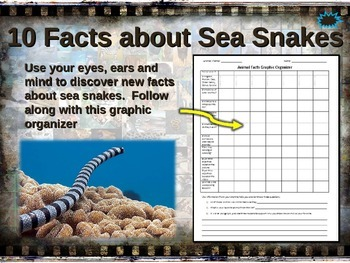 SEA SNAKES: 10 facts. Fun, engaging PPT (w links & free graphic organizer)