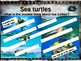 SEA TURTLES: 10 facts. Fun, engaging PPT (w links & free graphic organizer)