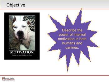 SEL - Motivation