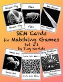 Microscope Image Matching Cards Set #1 Scanning Electron M