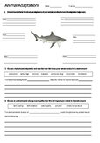 SHARK Adaptations Worksheet | Year 5 Science (ACSSU043)